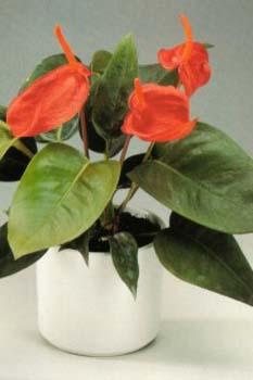 Topfpflanzen for Spezielle zimmerpflanzen